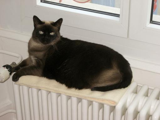 Kaune radiatoriai šyla ne visuose butuose