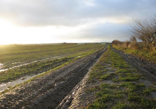 Nukentėję ūkininkai raginami kreiptis į savivaldybes