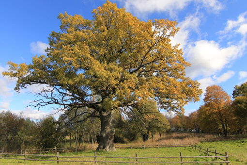 Jau antrus metus iš eilės renkamas Metų medis