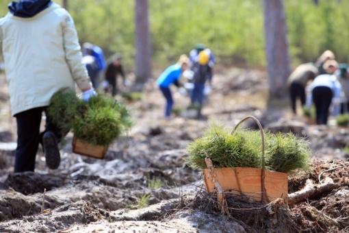 Birštone vyks visuotinis Lietuvos valstybės atkūrimo miškasodis