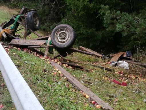 Kelmės rajone automobilis trenkėsi į arklio traukiamą vežimą ir jį sumaitojo
