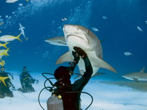 Pasimetusiam ir ryklio persekiojamam australui teko plaukti aštuonis kilometrus