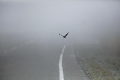 Kelininkai įspėja: naktį eismo sąlygas sunkins plikledis ir rūkas