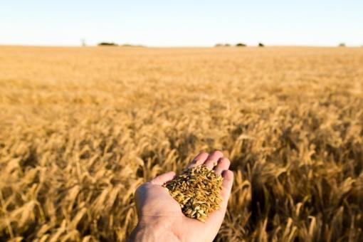 Žemės ūkio ministerija nori kurti filmą, pristatantį šalies žemės ūkį
