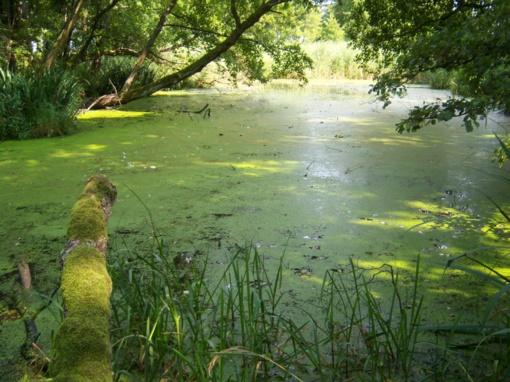 Pelkių ekosistemų išsaugojimas - nauda kiekvienam Lietuvos gyventojui