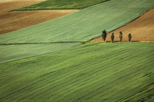 Seimas priėmė Žemės ūkio paskirties žemės įsigijimo įstatymą