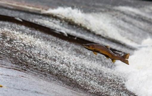 Aplinkosaugininkai rudenį nustatė 355 žuvų brakonieriavimo atvejus