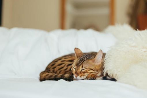 Tyrimas atskleidė, kaip gyvena Lietuvos katės