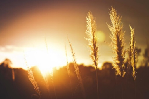 Vitamino D trūkumas šaltuoju metų laiku kankina kas antrą: kaip išvengti nuolatinio nuovargio?