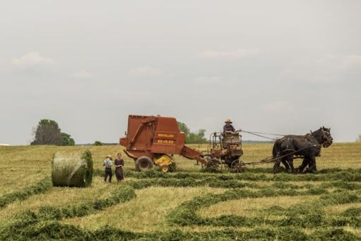 Per gruodį ūkininkus pasieks 241 mln. Eur paramos lėšų