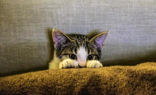 Pirkinių draudimas: ar galima apdrausti katę ir kas moka už pavogtą daiktą?