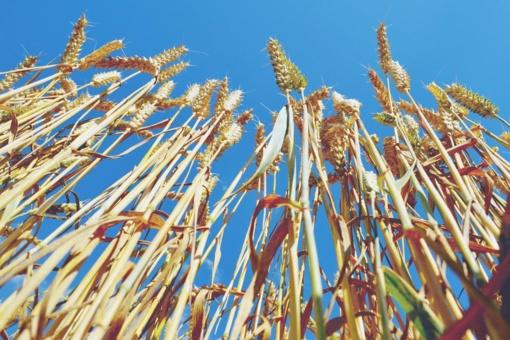 Dėl sausų orų žemdirbiai pavojaus neskelbia, bet į dangų jau dairosi