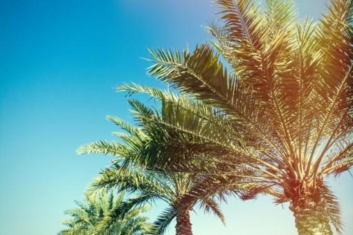 Lietuvaičių Kalėdos Sicilijoje. Puoštos palmės, o vietoj kūčiukų - lęšių sriuba