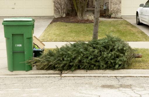 Kur išmesti nupuoštas kalėdines eglutes?