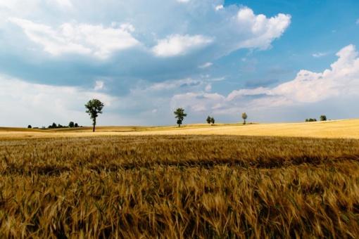 Lietuvos žemės ūkio ir maisto taryba kviečia pasirašyti peticiją