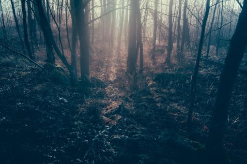 Alytaus rajone rastas žaizdotas vyro lavonas