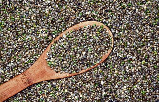 Kanapių sėklų naudą patirkite patys