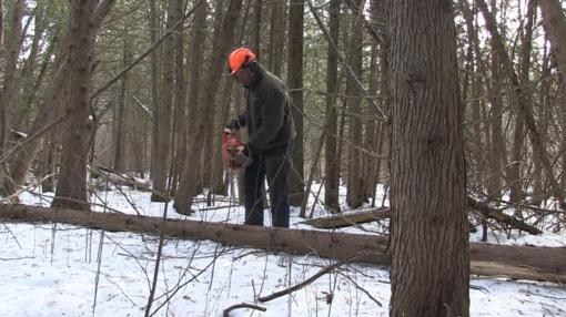 Miško kirtimas – vienas iš rizikingiausių darbų šalies ūkyje