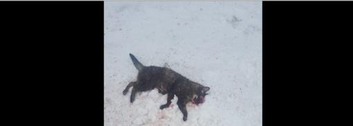 Žmonės sužvėrėjo: Ukmergėje įsiutęs vairuotojas tyčia suvažinėjo katę?