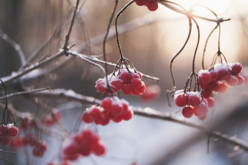 Orai: šalta žiema džiaugsimės neilgai – permainos jau arti