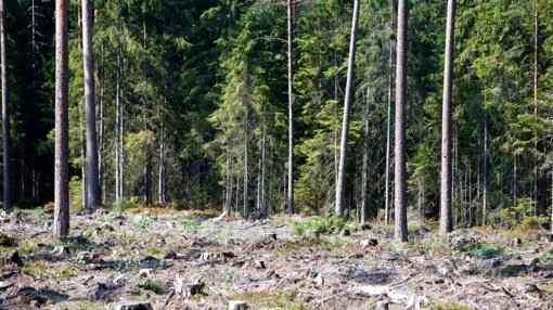 Dėl gaisrų pavojaus ketinama riboti lankymąsi miškuose pietų ir pietryčių Lietuvoje