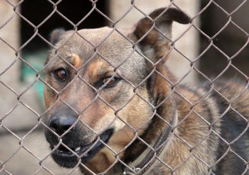 Planuojama keisti žiauraus elgesio su gyvūnais tyrimų tvarką