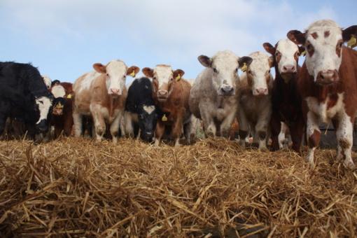 Pieno gamintojai ir perdirbėjai nesutaria, kokią įtaką turės mažėjantis pieno ūkių skaičius