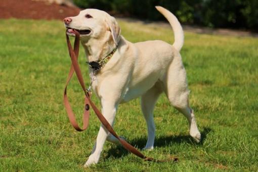 Kviečia dalyvauti kaniterapijoje - užsiėmimuose su šunimi