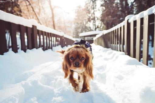 Kaip išlaikyti augintinius laimingus ir sveikus žiemą