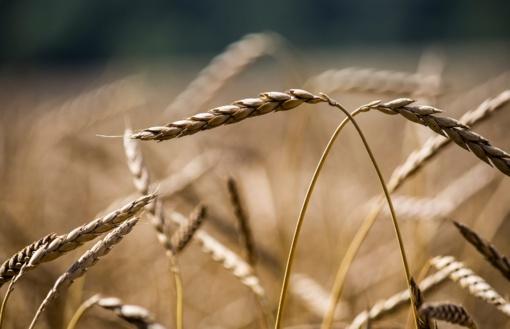 Ūkininkai sulauks ketvirtadaliu mažiau patikrų