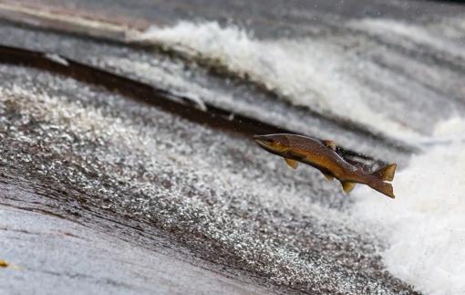 Žuvivaisa valstybiniuose vandens telkiniuose – prioritetas ilgalaikiam įžuvinimui