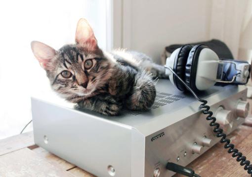 Mokslininkai sukūrė tobulą muziką... katėms