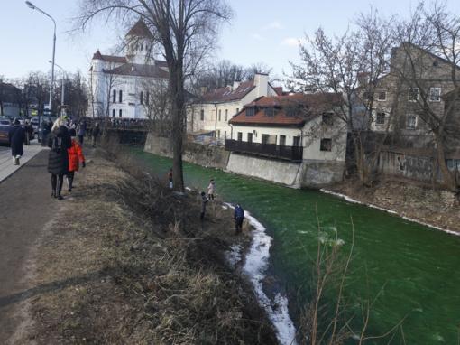 Šv. Patriko dienos proga Vilnios upė nusidažė žaliai