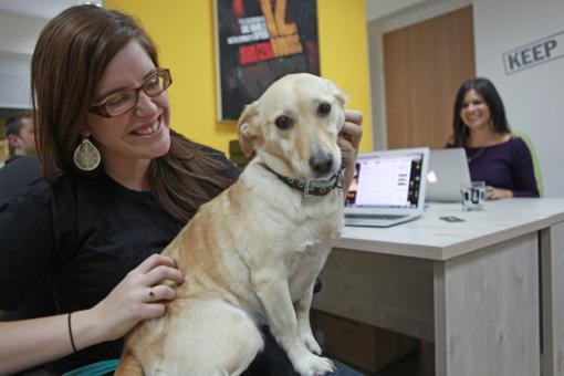 Šuo darbe