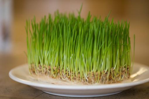 Daigintos sėklos: kuo naudingos ir su kuo valgyti?