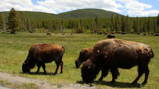 Trečdaliui Amerikos laukinės gyvūnijos gresia išnykimas