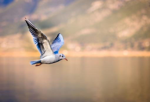 """""""Paukščių sugrįžtuvės"""" kviečia į paukščių rojų"""