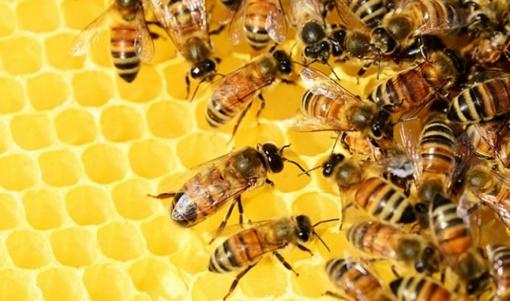 Prienuose pavogti bičių aviliai - nuostolis milžiniškas