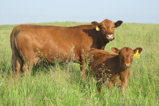 Parama gyvuliams įsigyti – beveik 2 mln. eurų