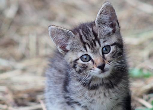 10 maisto produktų, žalingų katėms
