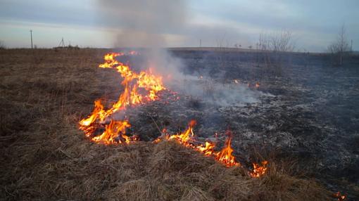 Aplinkos apsaugos reikalavimai lauko sąlygomis deginant augalus ar jų dalis