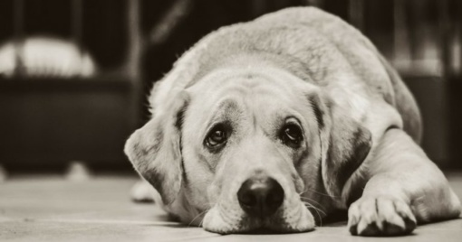 Už žiaurų elgesį su gyvūnais – siūlymas dalyvauti elgesio pataisos programoje
