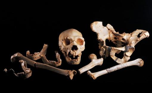 Raseinių rajone rasta žmogaus kaukolė ir kaulai