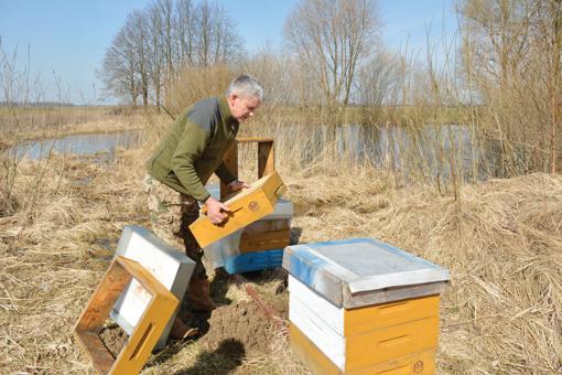 Vagių įžūlumas: aviliai vagiami su visomis bitėmis