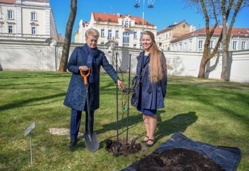 Prezidentė kviečia sodinti šimtmečio ąžuoliukus