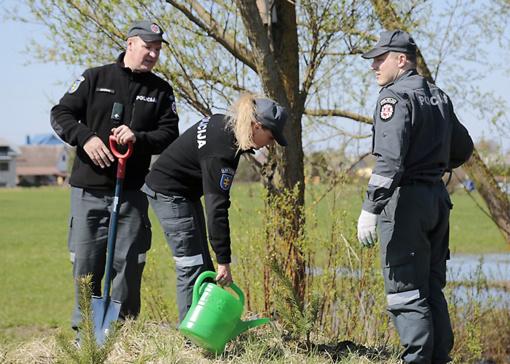 Santarvės parke augs policijos, teismo ir prokuratūros darbuotojų pasodintos pušys