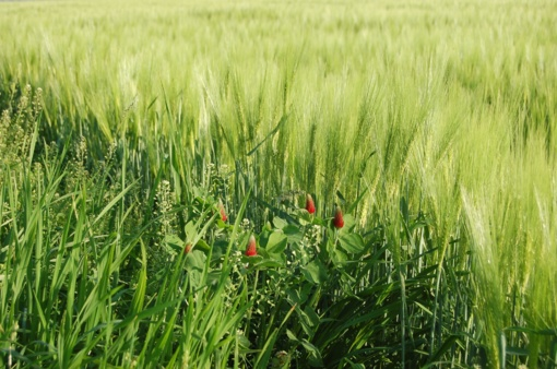Seimas vėl svarstys siūlymą tirti padėtį žemės ūkyje