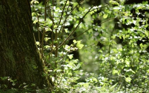 Investicijos į miškininkystės technologijas grįžta su kaupu