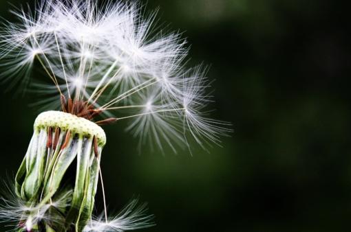 Pasiruoškime pavasario alergijos sezonui