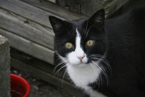 Kupiškyje sulaikytas vyras, įtariama, nužudęs katę ir kačiukus